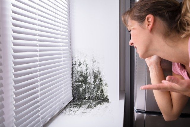 What to Do If Your House Has Mold (Or You Think It Does): There are two key reasons why you should not disturb mold. The purpose of this article is to help you determine if you have a mold problem by identifying the top 7 areas in your home that you will likely find mold and explains what you should NOT DO if you do find mold.