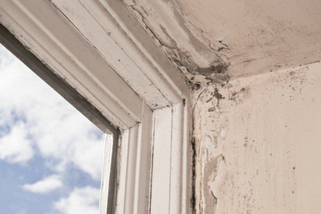 Mold Will Reduce Your Property Value!