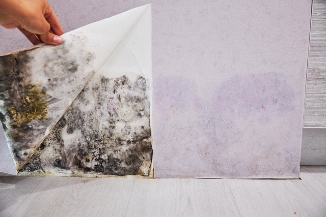 Inspect Your Crawl Space, Storage Room, Attic, and Basement For Mold!