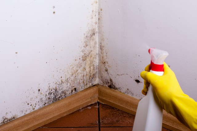 Black Mold Should Not Be Disturbed!